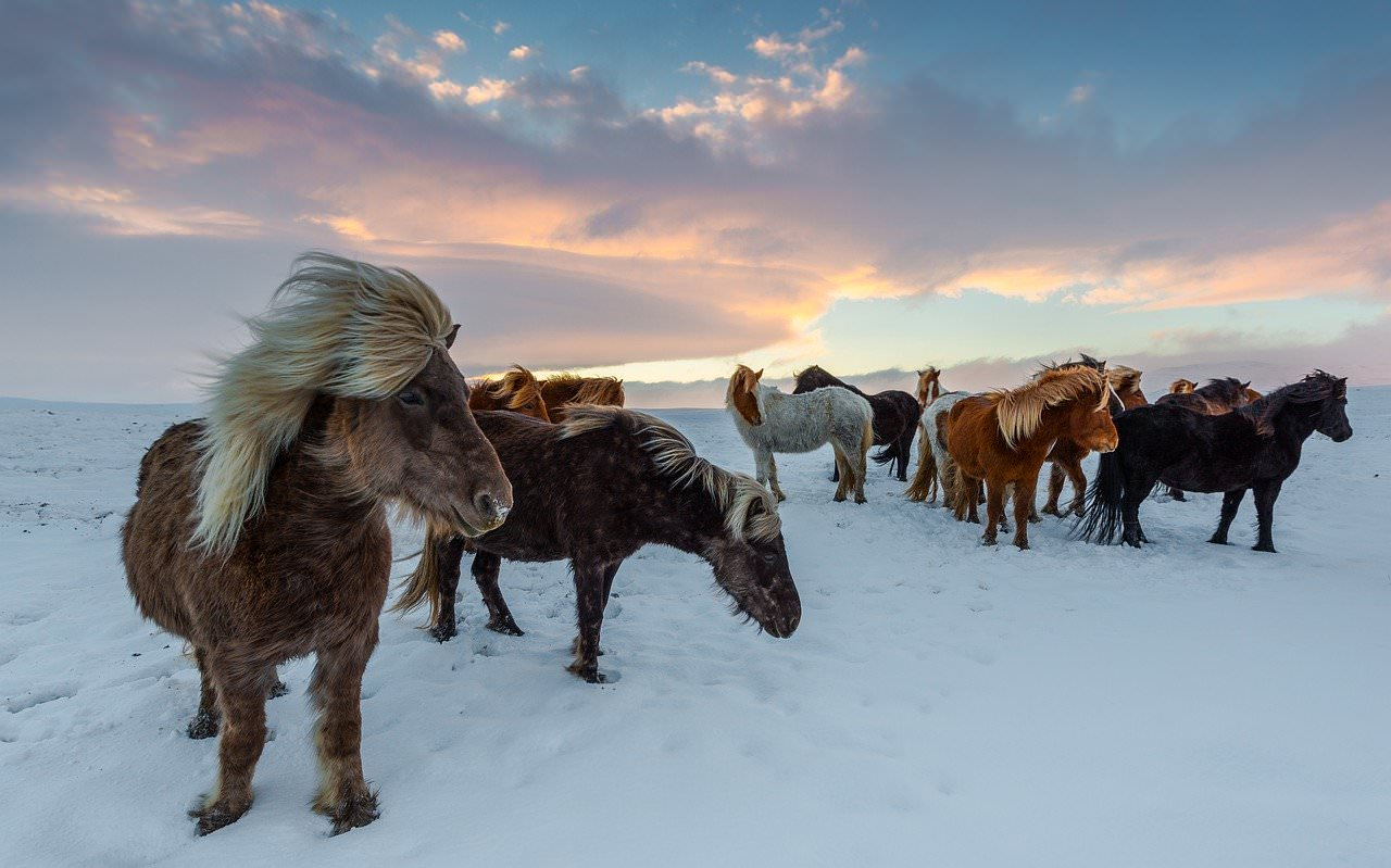 where are the iceland horses located, best iceland photography spots