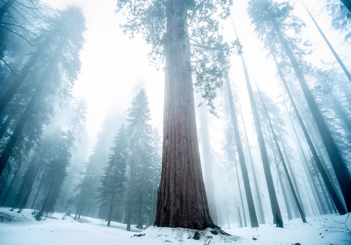 where is Tuolumne Grove in yosemite national park, best photography locations in yosemite