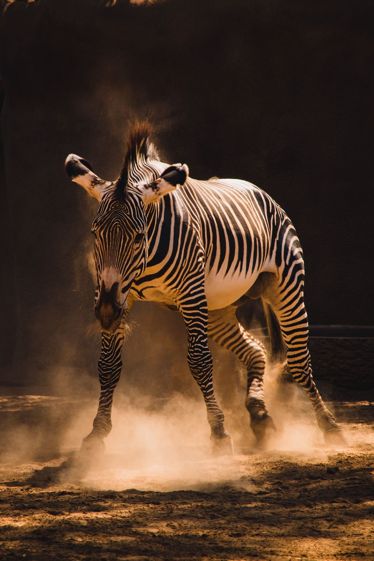 best photography spots in san diego california, the san diego zoo